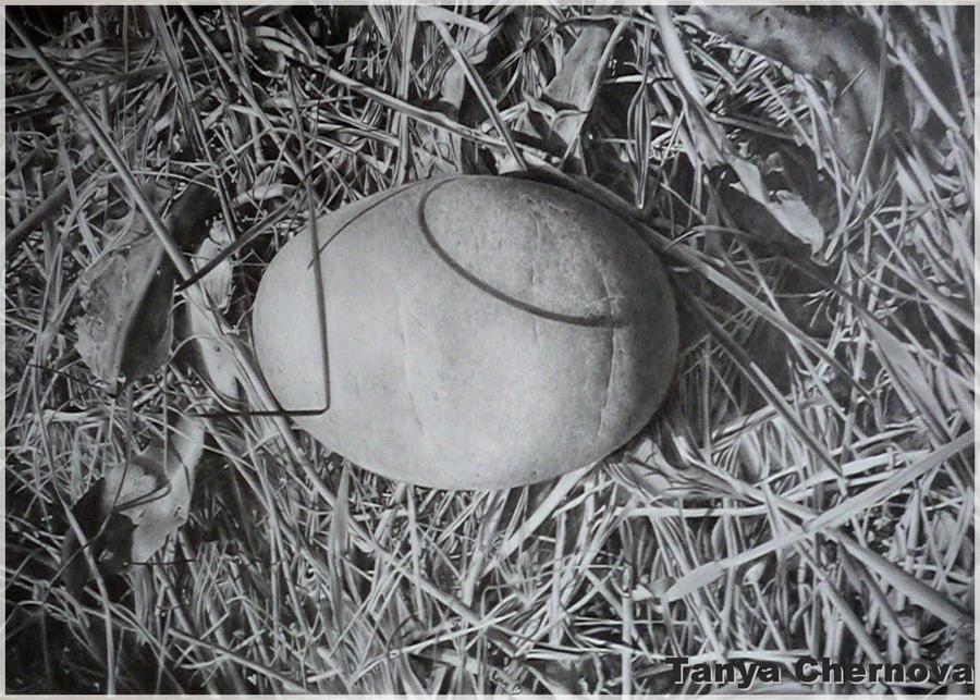 Stone by yatanya