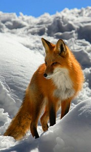 gmlicorne's Profile Picture