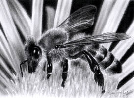 Bee by solyrosas