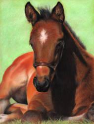 Thoroughbred Foal by solyrosas