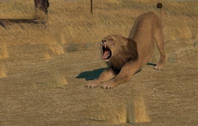 Lion waking up by LionkingCMSL
