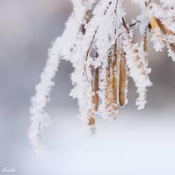 Cold harmony