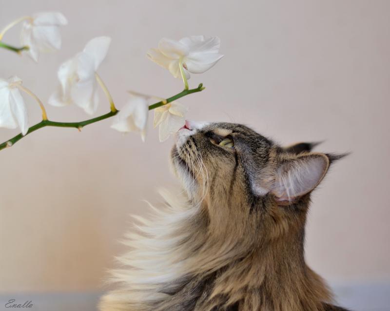 All girls love flowers by Enalla