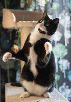 Dancing cat by Enalla