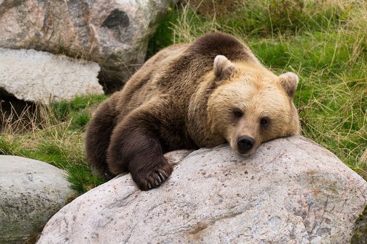 Sleepy by Enalla