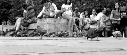 urban birds by goerf