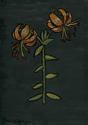Lilies4 by Drzewobojczyni