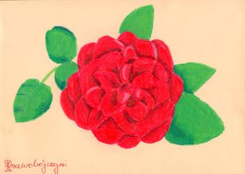 Rose8 by Drzewobojczyni