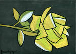 Rose11 by Drzewobojczyni