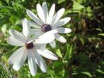 Flower Freinds by Akienet