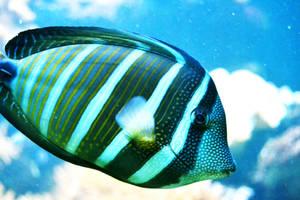 Blue Fish by FrankAndCarySTOCK