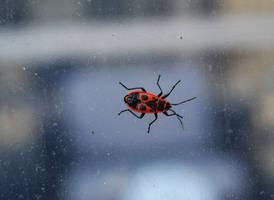 Bug by FrankAndCarySTOCK