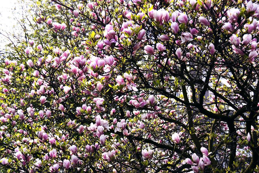 Spring by FrankAndCarySTOCK