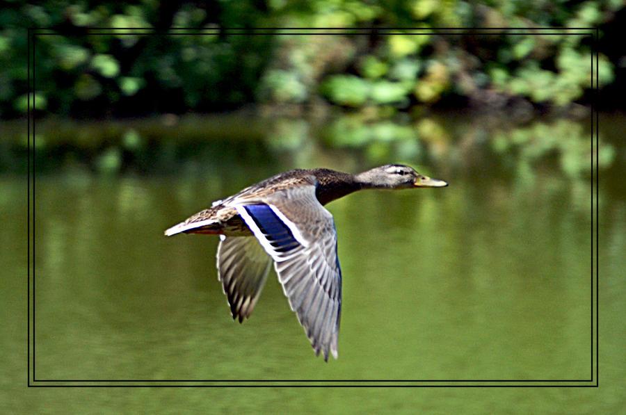 Fly by FrankAndCarySTOCK