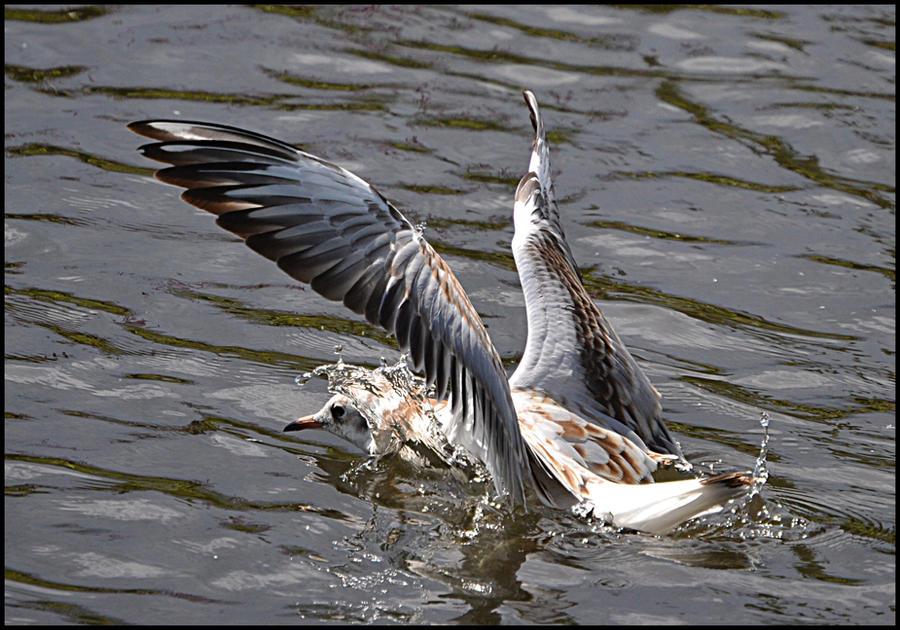 Swimming Bird by FrankAndCarySTOCK