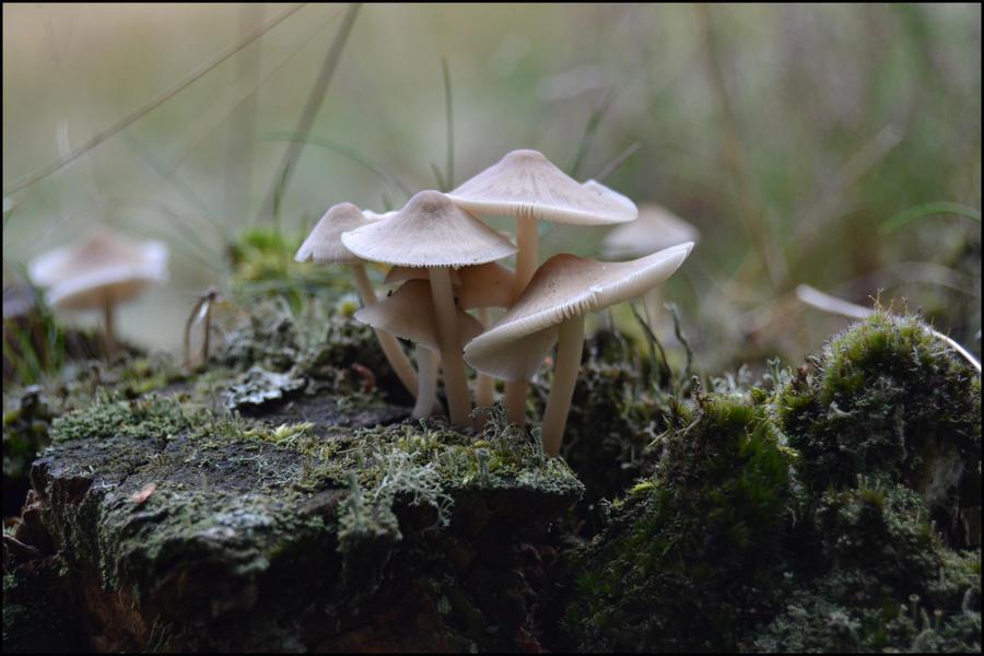 Mushroom Country