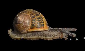 Snail by FrankAndCarySTOCK