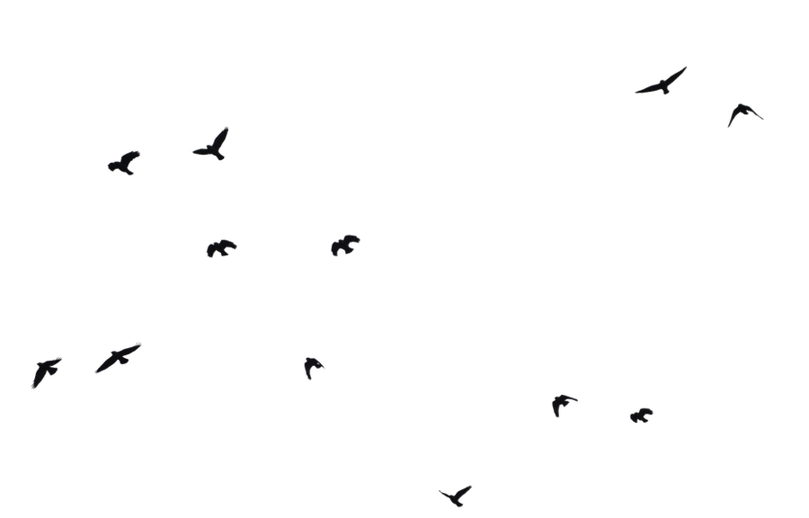 Flock of birds silhouette png - photo#20
