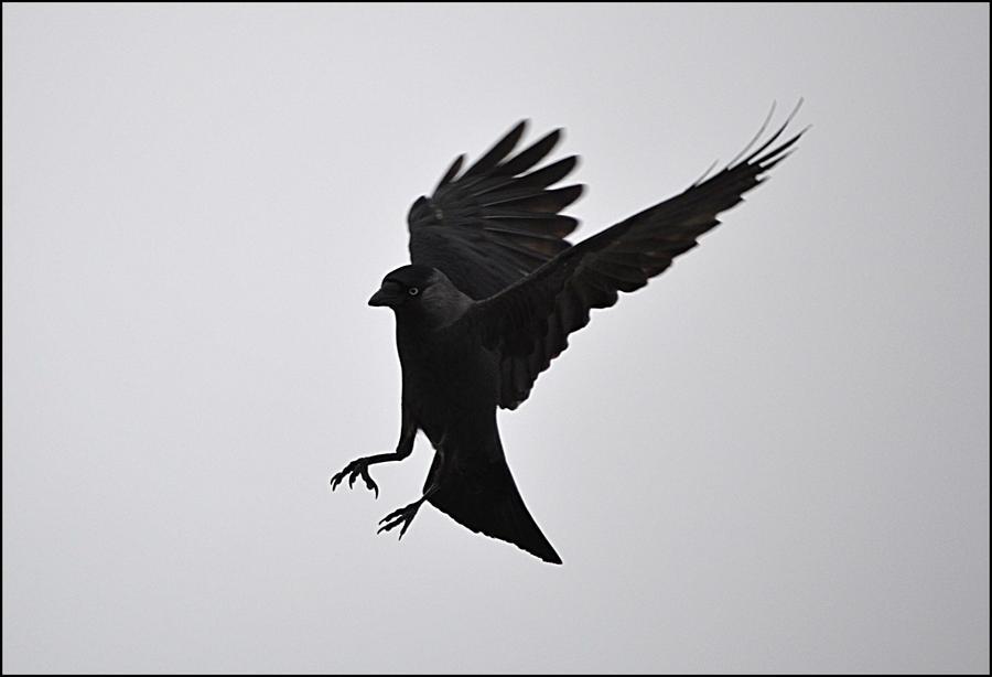 Bird1 by FrankAndCarySTOCK