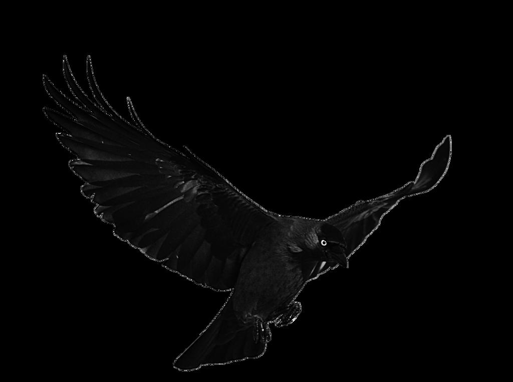 raven wallpaper black and white