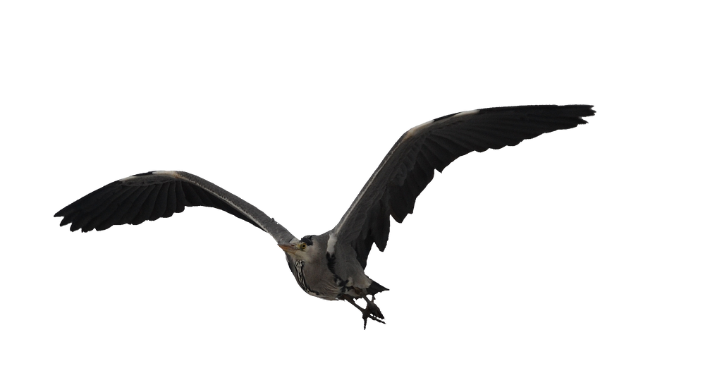 Heron1 Stock