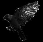 Jackdaw masked stock