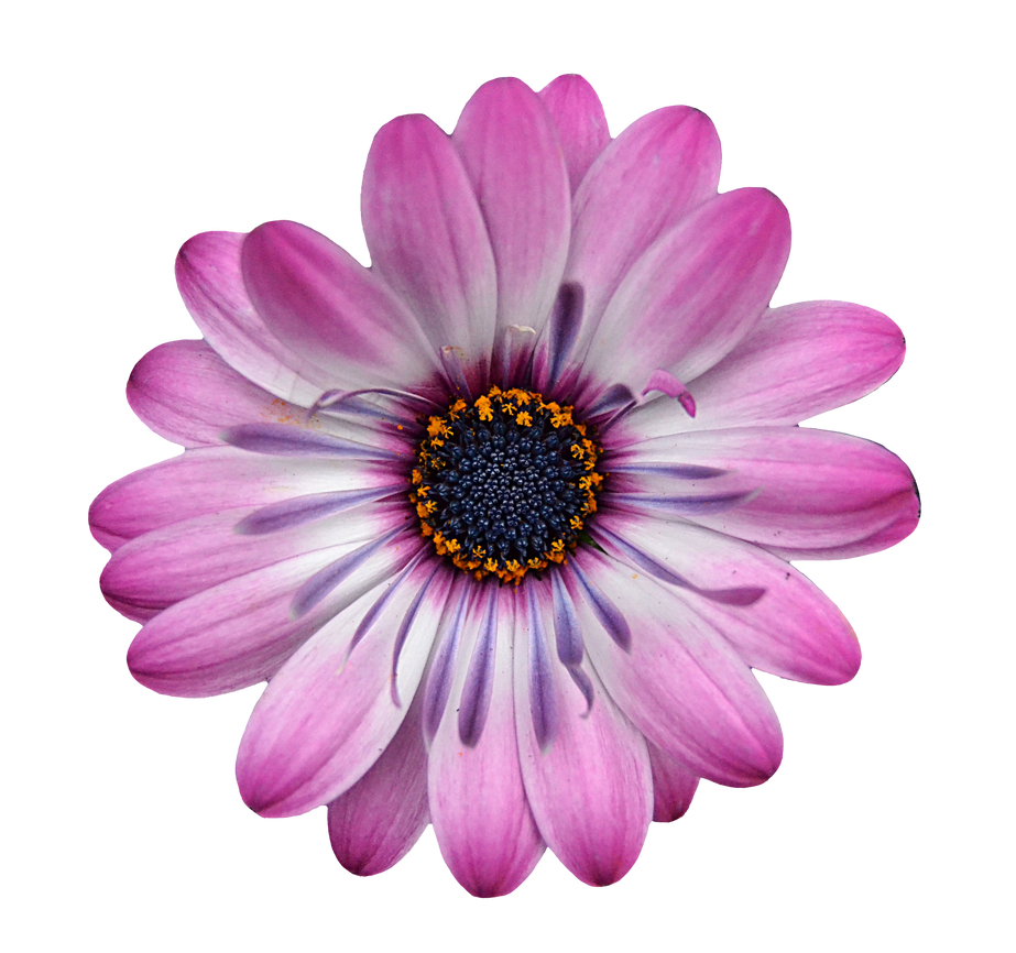 Flower1 by FrankAndCarySTOCK