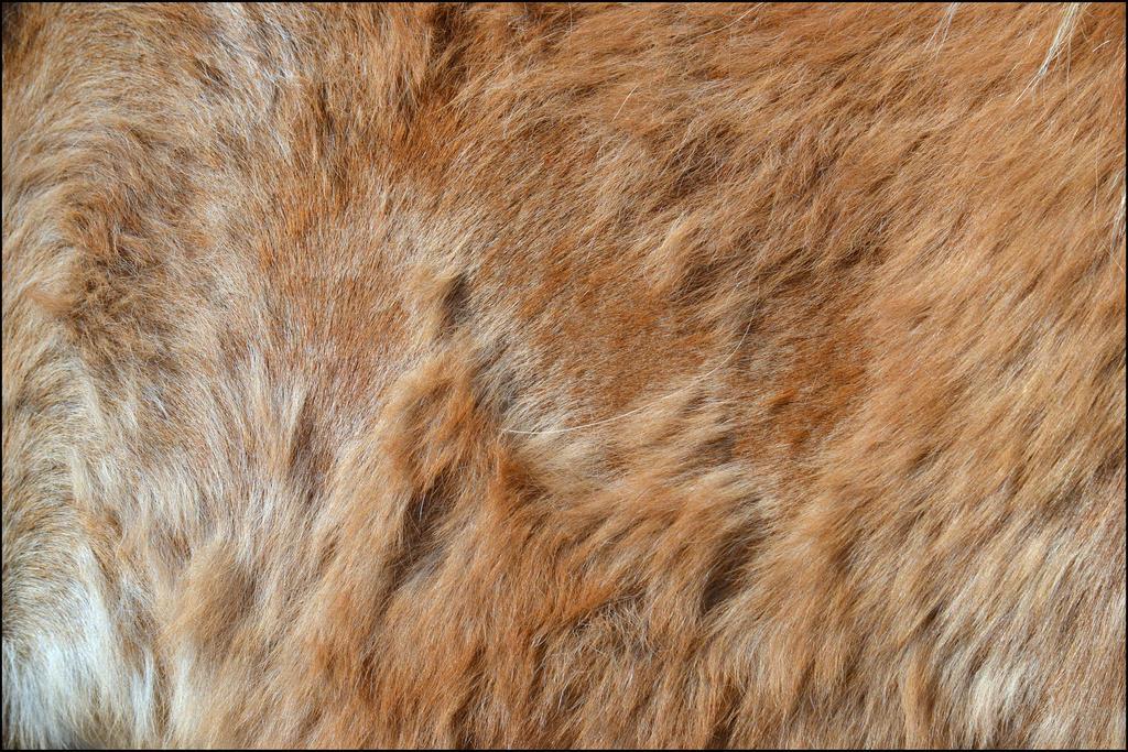 Horse Fur Texture2 By FrankAndCarySTOCK On DeviantArt
