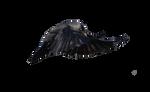 Masked Bird stock1