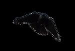 Masked bird stock3