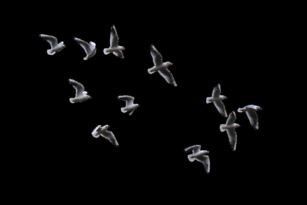 Masked Gulls by FrankAndCarySTOCK