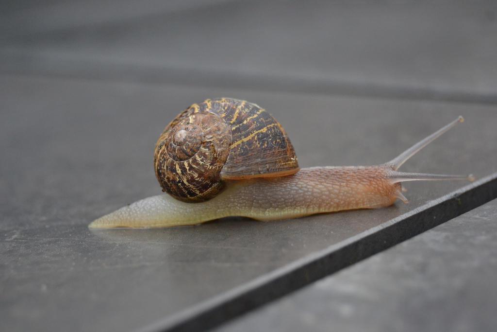 Snail1 Stock by FrankAndCarySTOCK