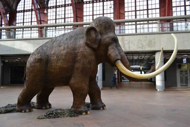 Mammoth stock