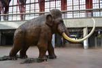 Mammoth stock by FrankAndCarySTOCK