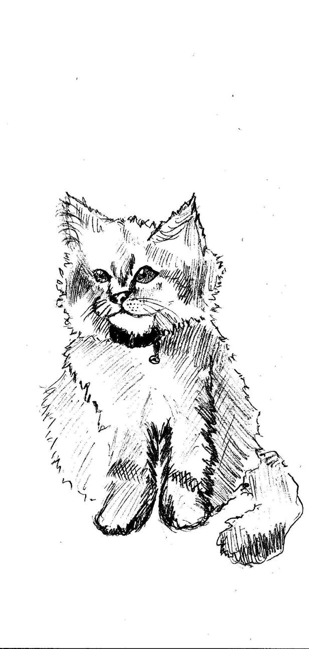 Cat *-* Jime by MareaiVasco
