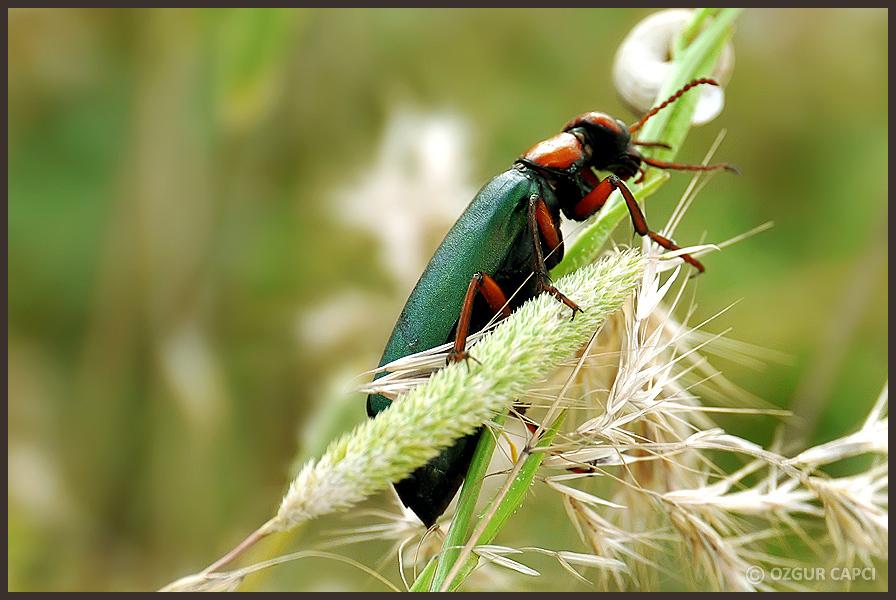 Bug by chucksc