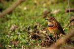Blue-Through-Sparrow