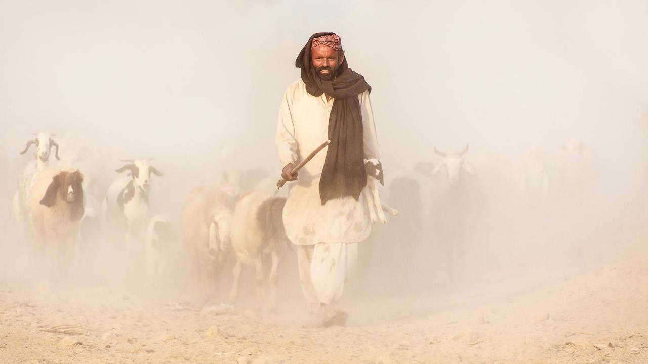 good shepherd:
