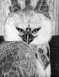 Harpy Eyes