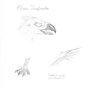 Phoenix TF