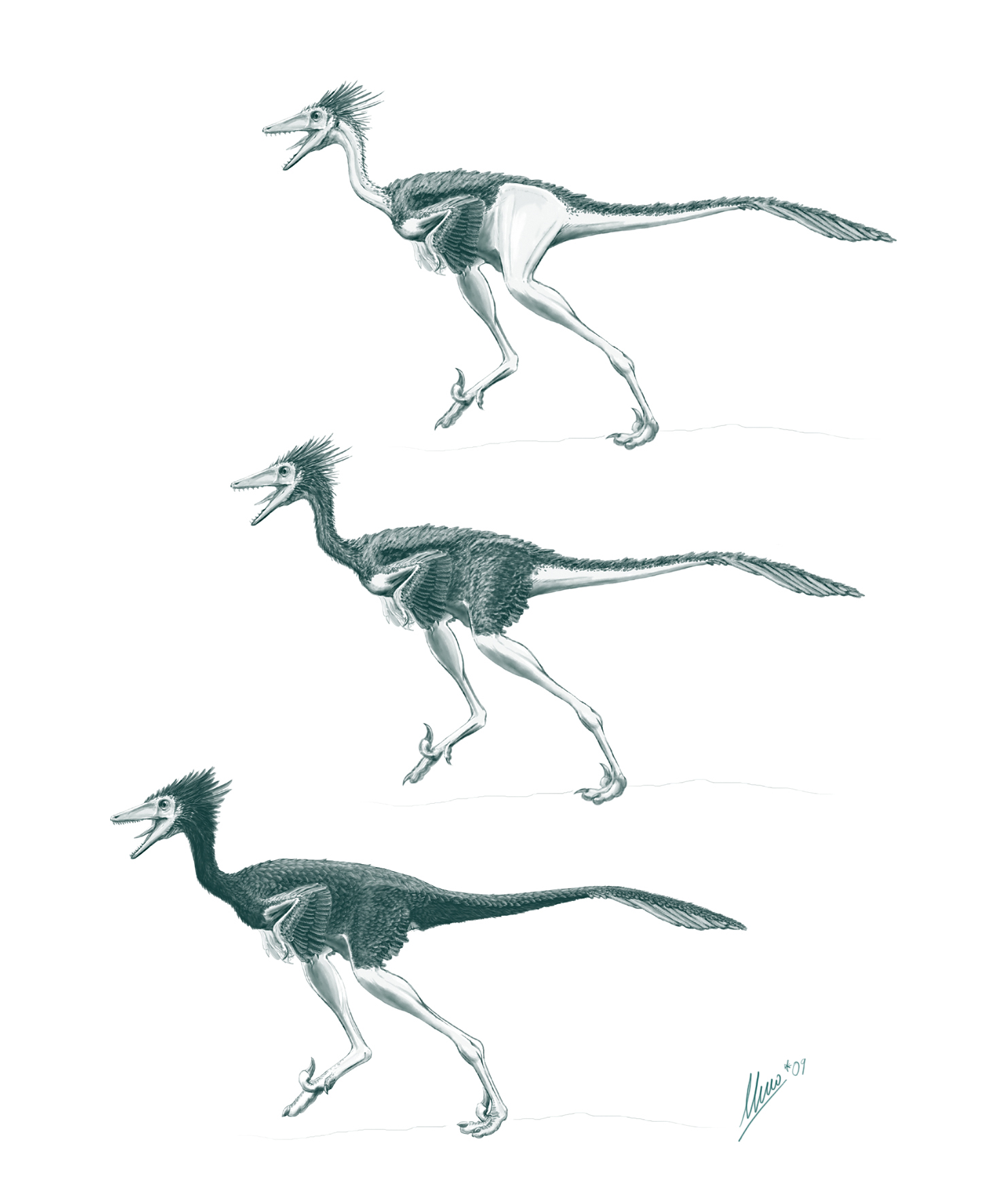 Troodon formosus feathered by TopGon