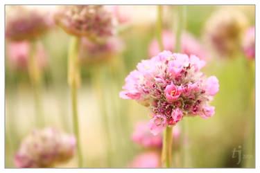 Flower III by cro4ky