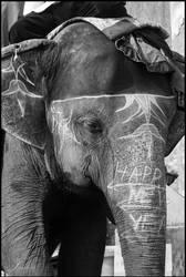 India 2013 - Happy New Year Elephant by cro4ky