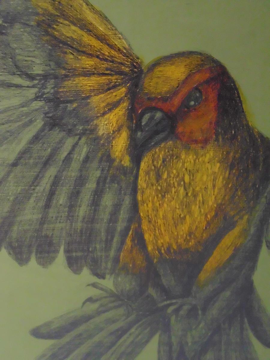 Bird by Milana87