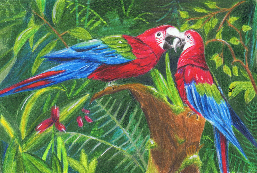 Macaws by Milana87