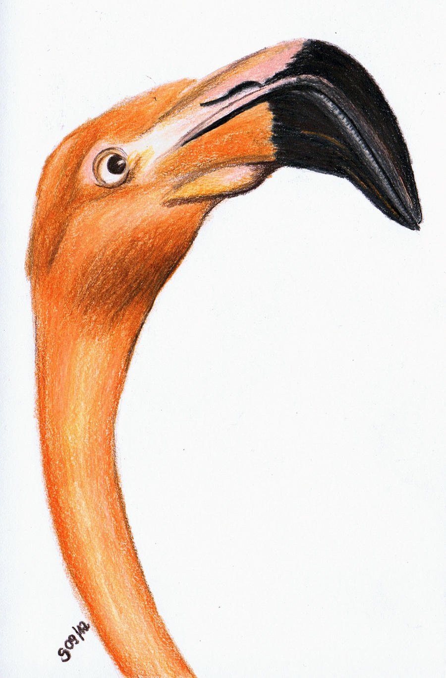Flamingo by Milana87
