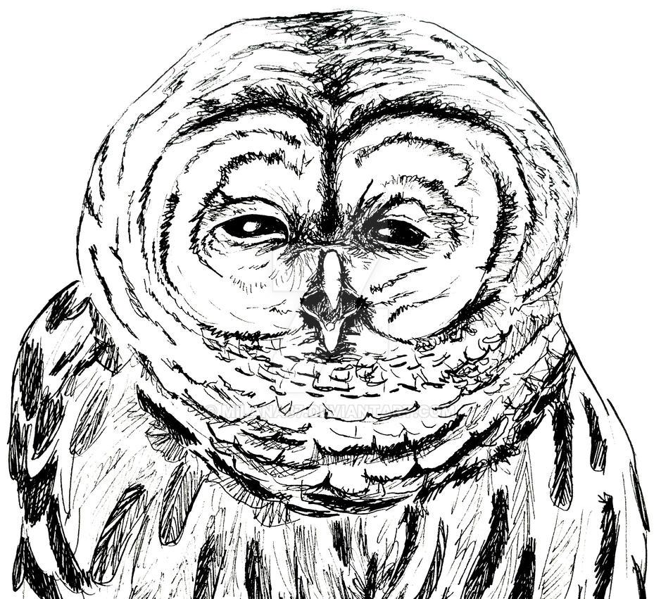 Owl - Sketch by Milana87