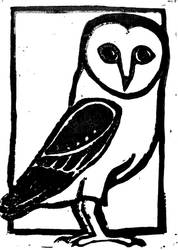 Barn owl by Milana87