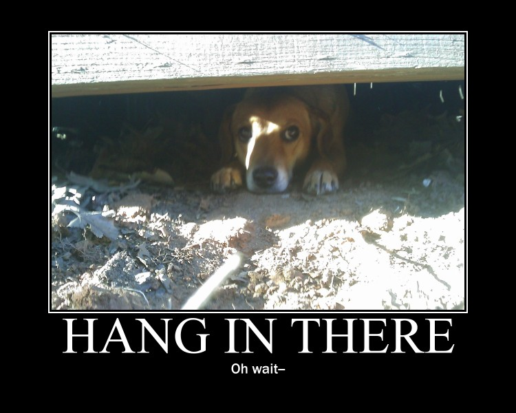 Hang In There -demotivation- by Dragunov-EX