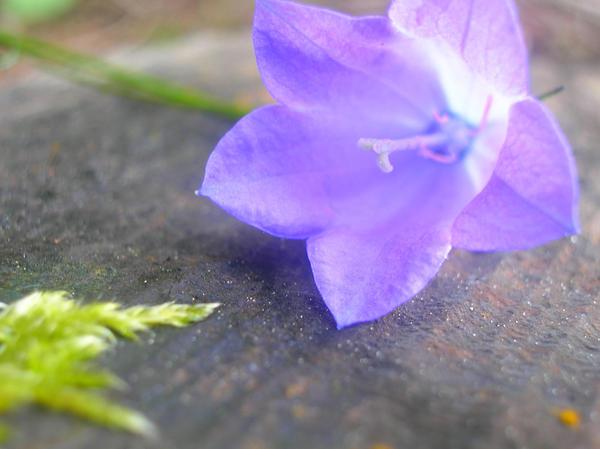 Beautiful purple flower by x-miss-drawings-x
